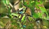 Dragonfly detail_HDR.jpg