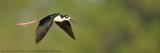 Wildlife Blog Slideshow
