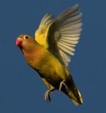 South Africa birds in flight
