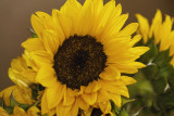 sun-flower2.jpg