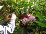 h43 seedling