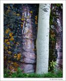 Aspen Trunk and Mossy Boulder, Maroon Bells Snowmass Wilderness, Colorado, 2013