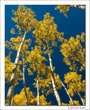 Aspens and Blue Sky, Maroon Bells Snowmass Wilderness, Colorado, 2013