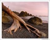 Ruby Beach III, Olympic National Park, Washington, 2014