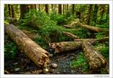 Logs and Creek, Olympic National Park, Washington, 2014