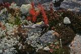 Lichen et mousse / comme arbre miniature