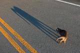 SON OMBRE A PEUR DE LUI ! / its shadow is afraid of him !