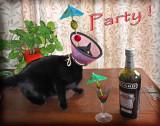 TooToonn PARTY