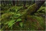 Kenai Rainforest