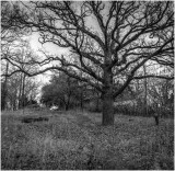 Big Old Tree in Snake Park