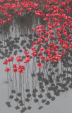 Bretton --  Poppies