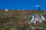 Mt Saint Helens 2013