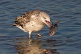 Shore and Sea Birds...