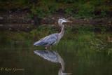 Wading Birds...