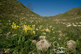 Valley of the Rocks: A Surprise of Cowslips.