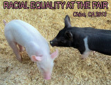 Racial equality at the fair