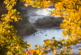 River Bend Park, American Parkway, Rancho Cordova, California, November 10, 2015