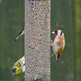 At my feeder