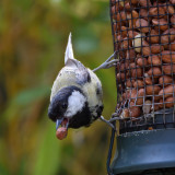 At our feeder