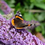 Gardens, Flowers Insects &reptiles