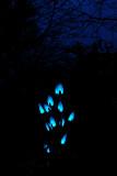 Night Lights @ RHS Rosemoor