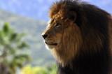 Zoo and Safari Park