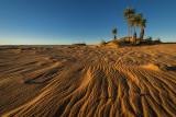 Dunes D80_0573V3s.jpg
