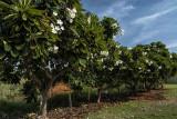 Trees_DSC4891s.jpg