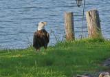 BeauxPoint Eagle Visit - 07/28/2014