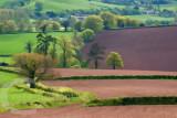 Mid Devon in Spring