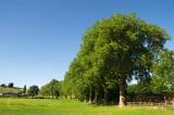 Tree line avenue at Hele - Bradninch