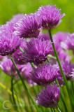 Backlit flowers