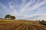 Fields near Bradninch - Devon