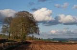 Rural Mid Devon