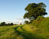 Fields on the path to Paradise Copse Mid Devon UKIMGP5661.jpg