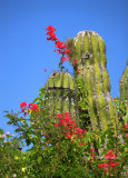 Cactus Closeup  Baja California Sur (MEXPHO)