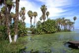 Estero de San Jose (MEXPHO) #1A1186