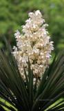 Succulent (MEXPHO)