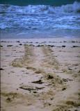 Turtle Tracks (MEXPHO)
