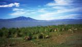 Lake Chapala SC3