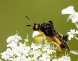 Jagged Ambush Bug AU14 #0045