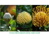 Protea: Stages