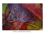 Tangled Web, Kula Botanical Gardens, Maui, Hawaii