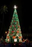 Honolulu Christmas Tree