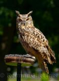 328 Owl.jpg