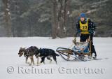 340 2 Dog Sled 7.jpg