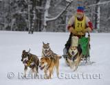 341 4 dog sled 1.jpg