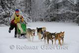 341 4 dog sled 3.jpg