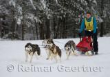 341 4 dog sled 5.jpg