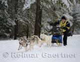 341 4 dog sled 12.jpg